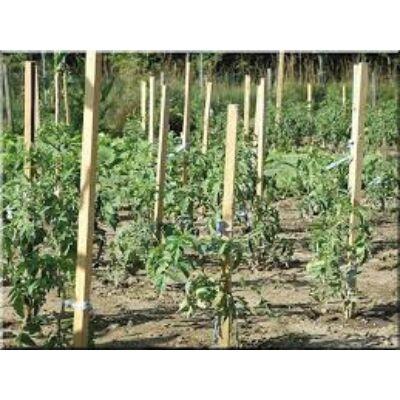 Akáckaró, termesztőkaró 2,5x2,5x170cm
