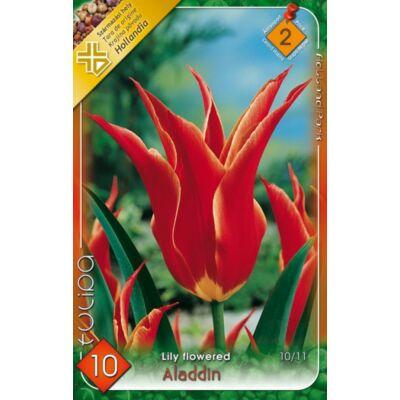 Tulipán virághagyma 10-db-os Aladdin