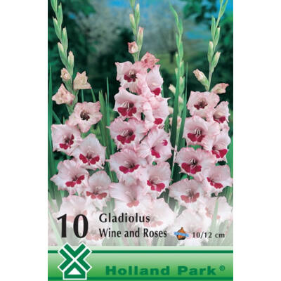Kardvirág Gladiolus Wine and Roses 10db/cs