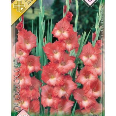 Kardvirág Gladiolus Spic and Span 10db/cs