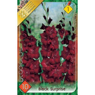 Kardvirág Gladiolus Black Surprise 10db/cs