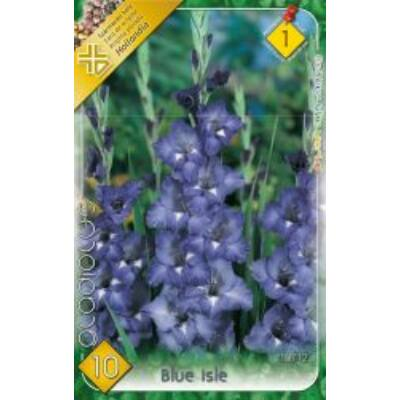 Kardvirág Gladiolus Blue  Isle 10db/cs