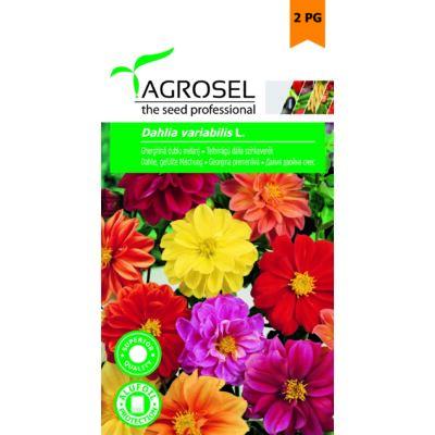 Agrosel Dahlia Virágmag 1g