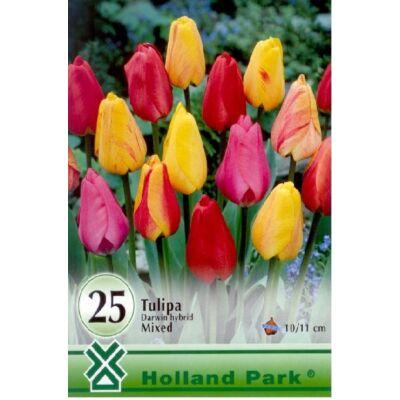 Tulipán virághagyma 25-db-os Darwin mix