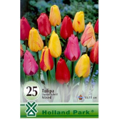 Tulipán virághagyma 10-db-os Darwin mix