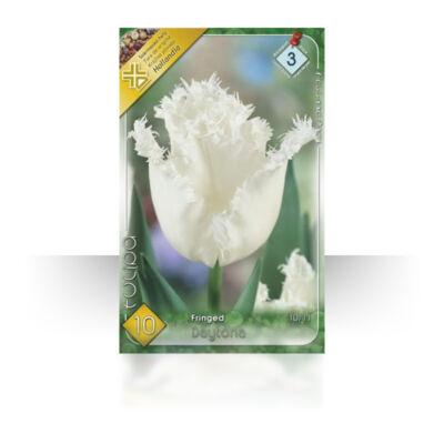 Tulipán virághagyma 10-db-os Daytona