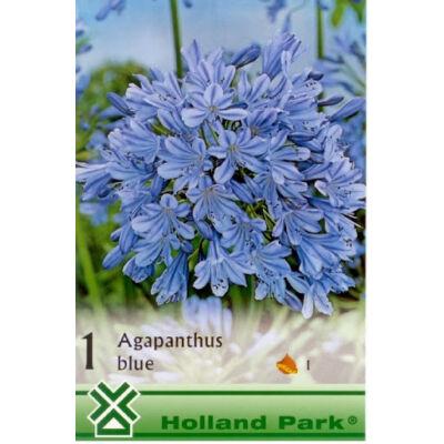 Szerelem Virág agapanthus Kék