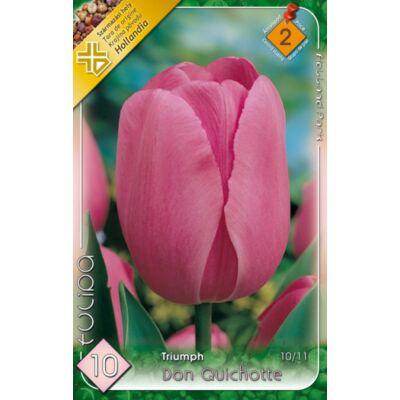 Tulipán virághagyma 10-db-os don Quichotte