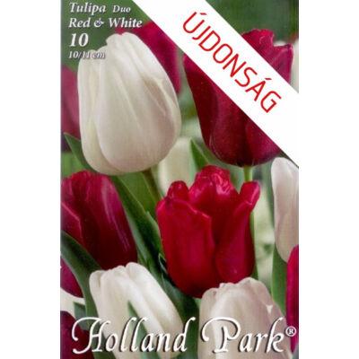 Tulipán virághagyma 10-db-os Duo red white