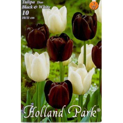 Tulipán virághagyma 10-db-os Duo black és fehér