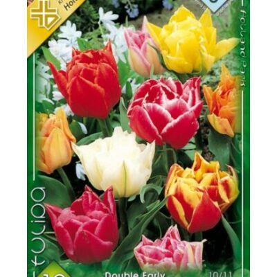 Tulipán virághagyma 10-db-os Doubl early mixed