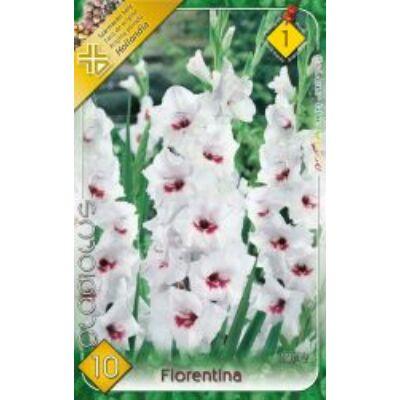 Kardvirág Gladiolus   Fiorentina 10db/cs