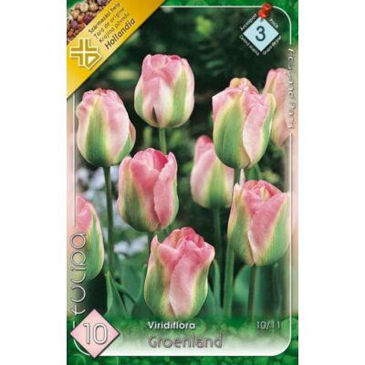 Tulipán virághagyma 10-db-os Groendland
