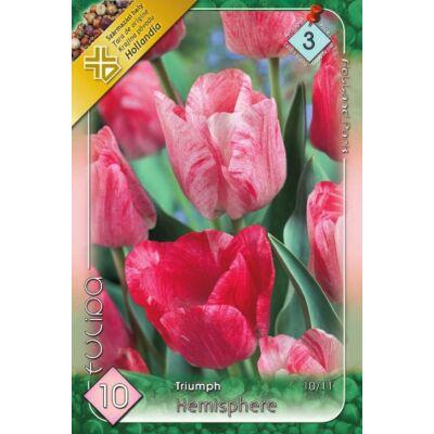 Tulipán virághagyma 10-db-os hemisphere