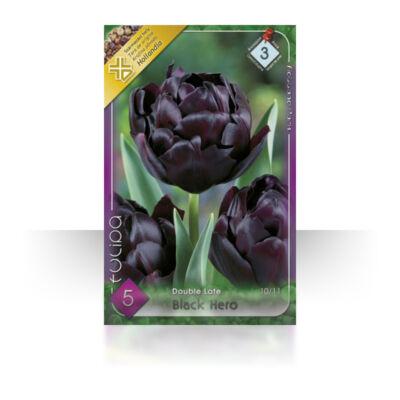 Tulipán virághagyma 5-db-os black hero