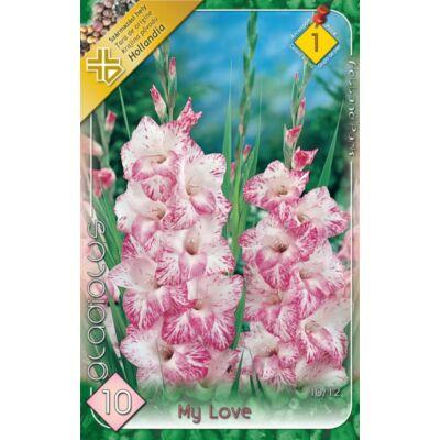 Kardvirág Gladiolus   My Love 10db/cs