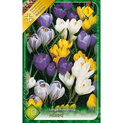 Crocus virághagyma  10-db large flowering Mixed