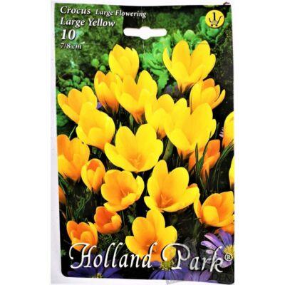 Crocus virághagyma  10-db large yellow