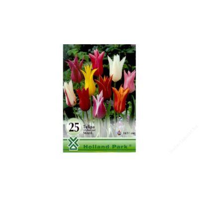Tulipán virághagyma 25-db-os Lilyflowered