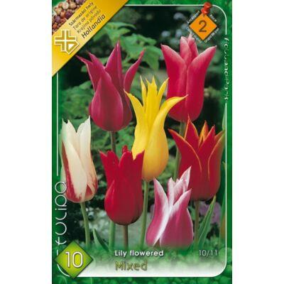 Tulipán virághagyma 10-db-os Lily flowered mixed