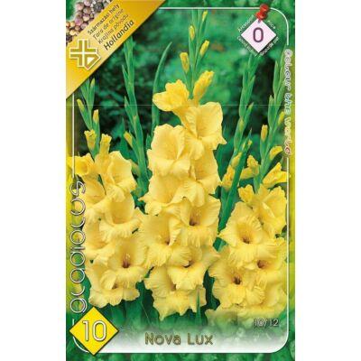 Kardvirág Gladiolus Nova Lux 10db/cs