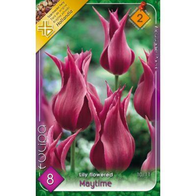 Tulipán virághagyma 8-db-os  Maytime