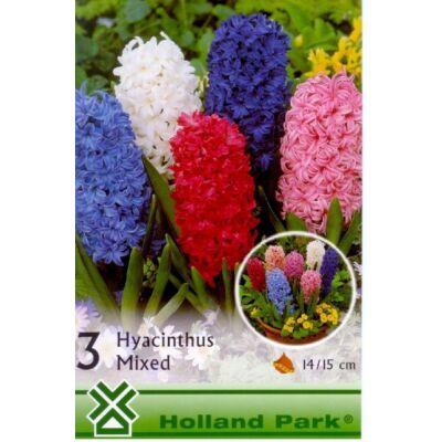 Jácint Virághagyma 3db-os Hyacinths mix