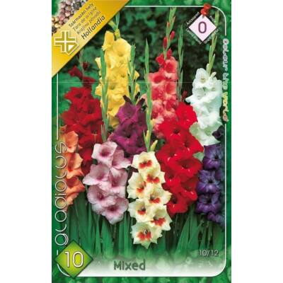 Kardvirág Gladiolus Mixed 10db/cs