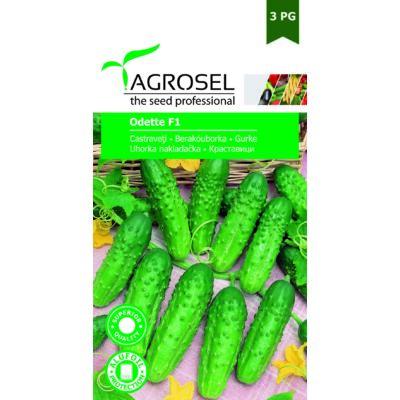 Agrosel uborka Odette F1 20szem