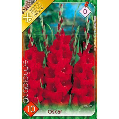 Kardvirág Gladiolus Oscar 10db/cs