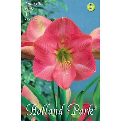 Amaryllis virághagyma 1-db Hippeastrum pink