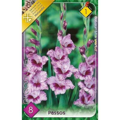 Kardvirág Gladiolus Passos 10db/cs