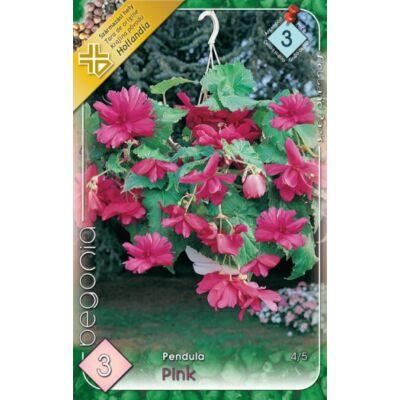 Begónia Csüngő  Pink 3db/cs