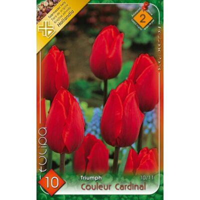 Tulipán virághagyma 10-db-os Coulerur Cardinál