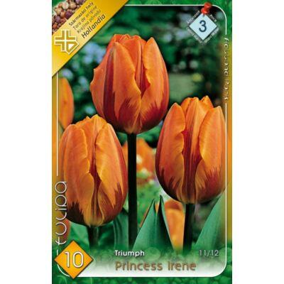 Tulipán virághagyma 10-db-os Pirincess Irene