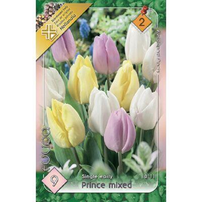 Tulipán virághagyma 9-db-os Prince Mixed