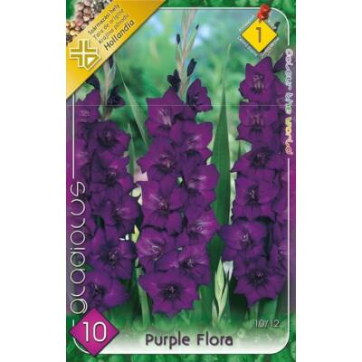 Kardvirág  Zantedeschia Purple Flora 1db/cs