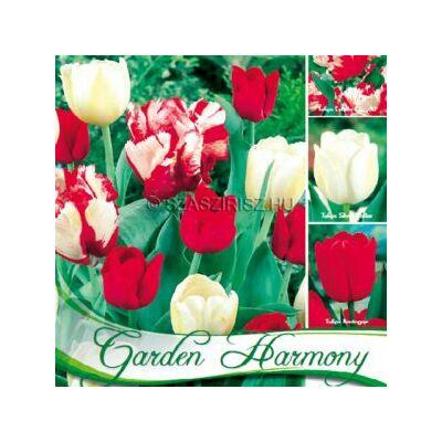 Tulipán virághagyma  18-db-os Red-White