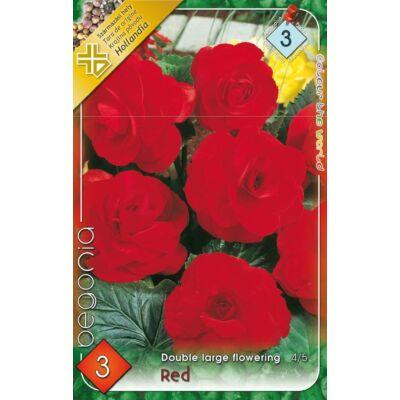 Begónia Double Large flowering Red 3db/cs