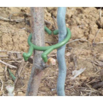 Növény rögzítő clip 25mm zöld