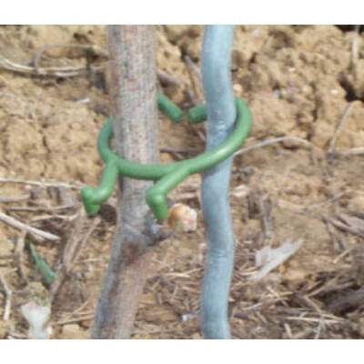 Növény rögzítő clip 20mm zöld