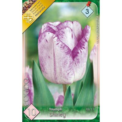 Tulipán virághagyma 10-db-os Shirley