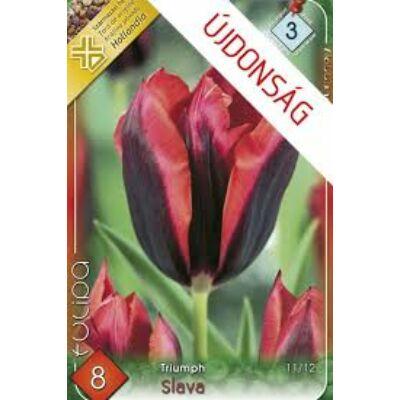 Tulipán virághagyma 8-db-os Slava