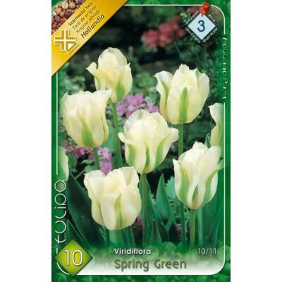 Tulipán virághagyma 10-db-os Spring Green