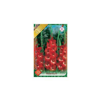 Kardvirág Gladiolus Traderhorn 10db/cs