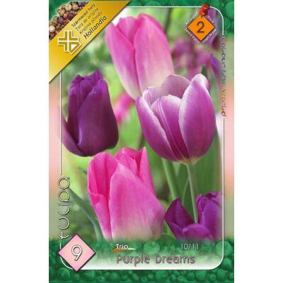 Tulipán virághagyma 10-db-os Trio Purple Dreams
