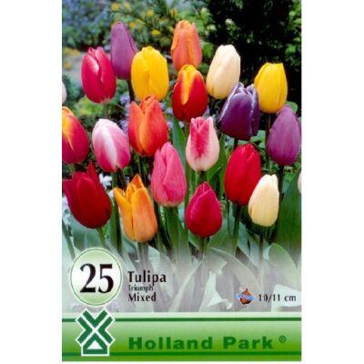 Tulipán virághagyma 25-db-os Triumph mix