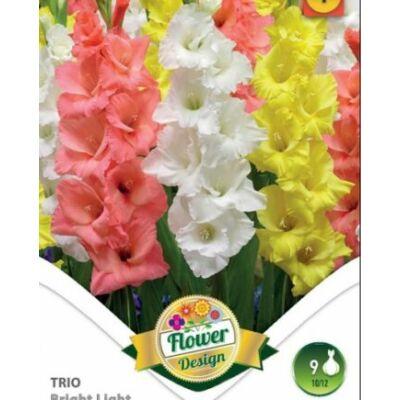 Kardvirág Gladiolus  Bright Light Trio 9db/cs