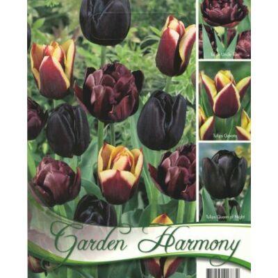 Tulipán virághagyma 18-db-os Fekete