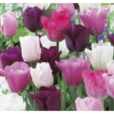 Tulipán virághagyma 10-db-os TrioDeep Velvet